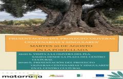 Mañana se presenta el proyecto 'Oliveras centenarias y singulares' de la comarca del Matarraña'