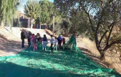 Los niños del Matarraña aprenden sobre el almendro en una jornada de sensibilización: Valdeltormo, Mazaleón y Calaceite